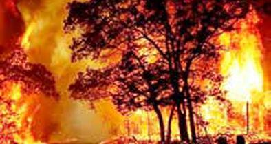 کاهش بیش از یک میلیون هکتار از وسعت جنگلهای نیمه انبوه کشور