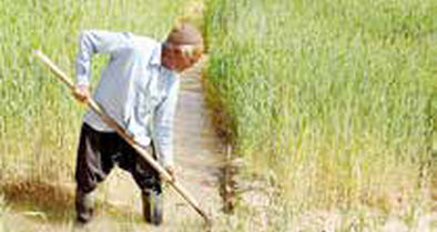سهم ۲۷درصدی روستاها از چرخه تولید کشور