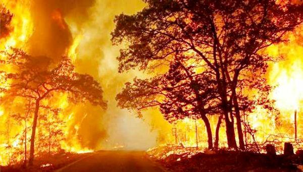 طفلک درختان سوخته و فروافتاده!