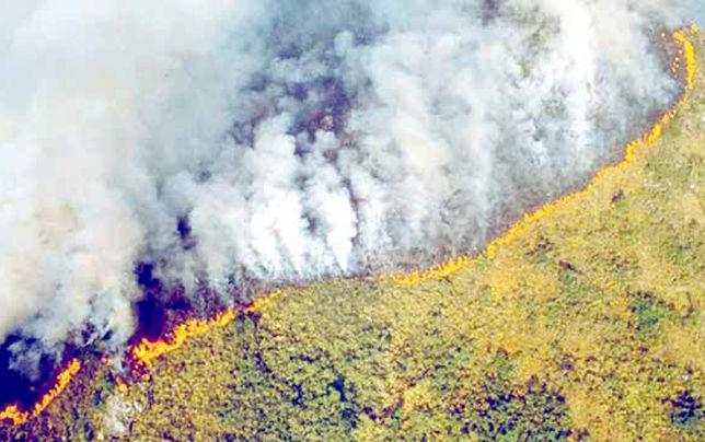 فشار اتحادیه اروپا بر برزیل برای نجات آمازون