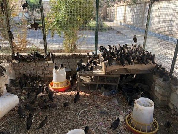 کشف محموله بزرگ پرندگان قاچاق در سراوان