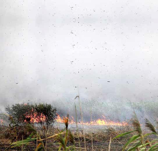 تغییر شیوه زمینخواران از درختکاری به آتشافروزی