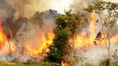امضای معاهده حفاظت از آمازون میان ۷ کشور آمریکای لاتین