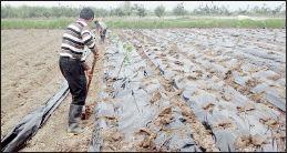 افزایش قیمت نمیتواند آب را نجات دهد