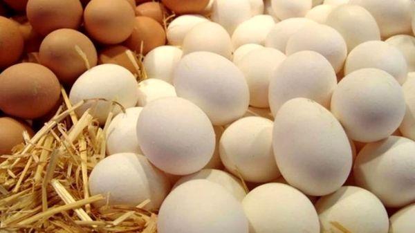 وزارت جهاد ممنوعیت عرضه تخم مرغ فلهای را رد کرد