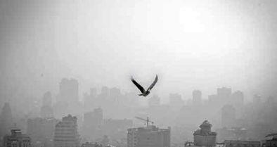 ریه تهرانیها؛ «انبار مازوت»