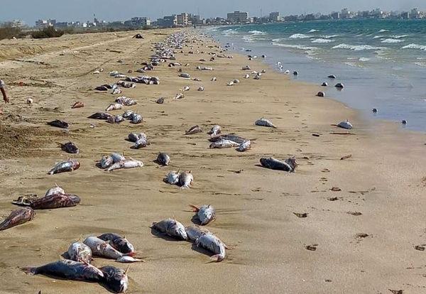 لاشه گربهماهیهای جاسک از قایق صیادان به ساحل رسید؟