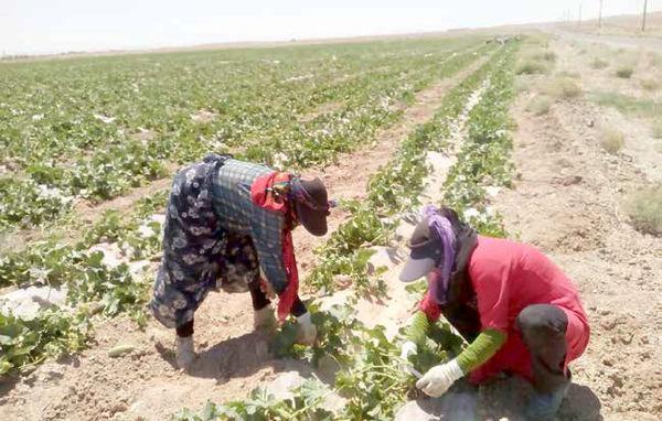 میلیونها زن در اقتصاد غیررسمی نان درمیآورند