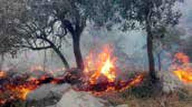 33هکتار از مزارع و مراتع ایلام در آتش سوخت