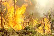 آتش به جان جنگلهای ارسباران افتاد