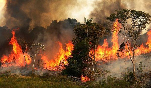 ردپای قاچاقچیان زغال در آتشسوزیهای زاگرس