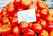 این بار نوبت گوجهفرنگی است!