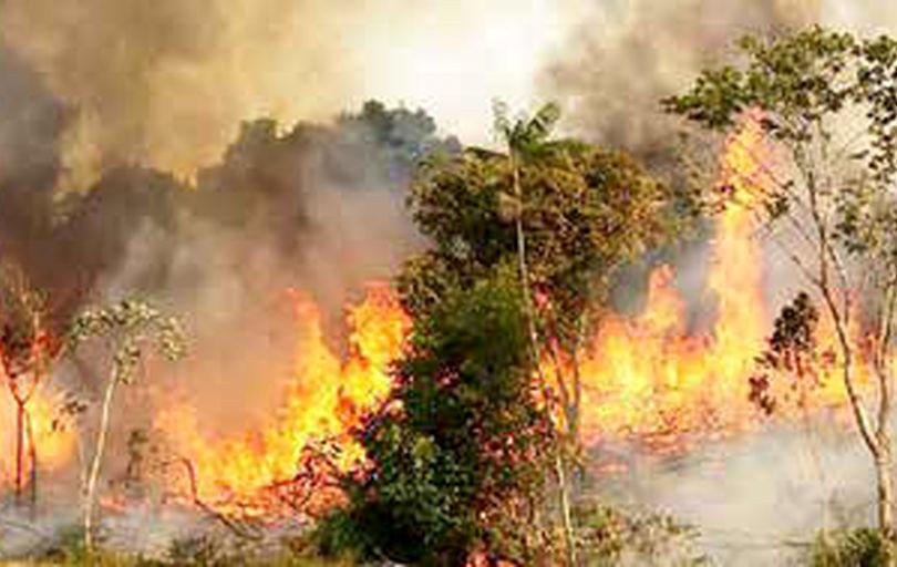 ورود دستگاههای نظارتی به موضوع آتشسوزی جنگلها