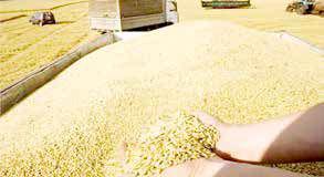مواظب قاچاق گندم از کشور باشید