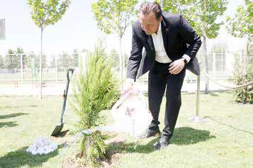 گرانترین درخت تاریخ